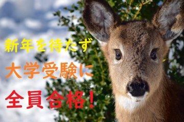 (deer-1209685_960_720)201224.jpg