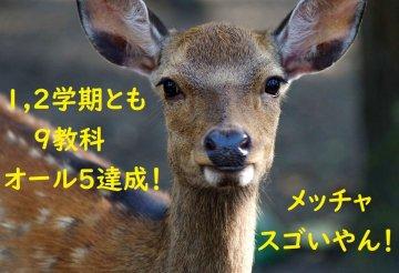 (roe-deer-4501860_960_720)201230-1.jpg